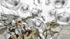 Spores (tralala.loordes) Tags: secondlife virtualreality vr sl tralalaloordes tralala tra eve blogging evenoctilucaflower eveetherealbodysilver meshcreation hpmg drdfingerclaws erratic miamai azoury bigleaf nokeyuitza flower