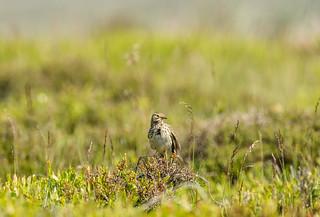 Wildlife around Magdalen June 2018 090