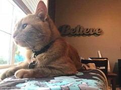 LOST cat orange tabby in #Tuscany meadows pls rt watch share to help find pumpkin pie YYC Pet Recovery shared Kyla McMullin's post. Looking for pumpkin pie (Tuscany meadows) since last night :( 2018-07-06T20:38:04.000Z by YYC Pet Recovery original fb post (yycpetrecovery) Tags: ifttt july 07 2018 orange pumpkinpie pumpkin tuscany orangewhite dsh dmh lostcat lost cat