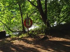 Relocated lifebuoy (Phil Gayton) Tags: path trail tree plant foliage concrete root lifebuoy riverside walk river dart totnes devon uk