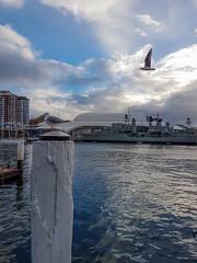 20180610_153957 (Damir Govorcin Photography) Tags: darling harbour sydney australian national maritime museum samsung s7 natural light vessel clouds seagulls