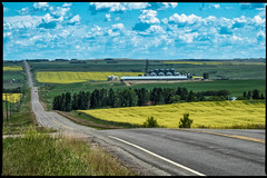 The Road (greenschist) Tags: plains trees farms road canola canada alberta