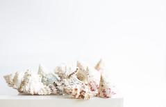 167/365: On the shellf (judi may) Tags: 365the2018edition 3652018 day167365 16jun18 shells seashells highkey white whitebackground shelf stilllife tabletopphotography canon5d 50mm bokeh depthoffield dof soft softness negativespace minimal simplicity