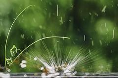 Explosion de goutte (boomer_phil) Tags: eau beautifulexpression flickrelite nikon d850 extérieur goutte couleurs instants bokeh
