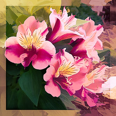 Don't ever save anything for a special occasion.  Being alive is the special occasion.  (Author Unknown) (boeckli) Tags: alstroemeria flowers blume blumen blüten bloom blossom blossoms blooms pink rosa peruvianlily photoborder topaz topazstudio painterly outdoor garden garten flower flora fleur bunt farbig farbenfroh colourful airemix
