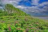 Küstenlandschaft (garzer06) Tags: himmel rosen blumen deutschland rot wasser blau küste wolken küstenlandschaft baum grabow mecklenburgvorpommern landschaft wellen ostsee bodden greifswalderbodden inselrügen strand insel landschaftsbild landscapephotography landschaftsfoto rügen wolkenhimmel naturephoto naturfotografie naturphotography landschaftsfotografie