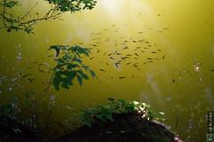 DSC01152 (g.lebloas) Tags: forêt bois arbre eau poisson