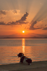 Woof! (Anthony P.26) Tags: category erdek hdr kapidag places travel turkey sunset coast coastline evening coastal sea water marmarasea islands waves ripples sun sunrays clouds goldenrays goldenglow outdoor travelphotography landscapephotography seascape canon70d canon1585mm canon sky ocean cloud landscape