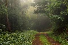 Walking in nature (jorgeverdasca) Tags: 5dmk4 canonphotography woodland woods landscape nature goth dream dreamland misty mist fog foggy sintra spring portugal
