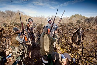 Argentina Luxury Dove Hunting 25