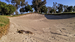 18th Hole... (THE.ARCH) Tags: turtle nature golf course sandtrap