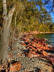 Winter wonderland IV (elphweb) Tags: hdr highdynamicrange nsw australia beach sand water ocean waves bay shore shoreline cove trees tree forest bush wood woods