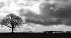 Standing Alone (WorcesterBarry) Tags: blackwhite blackandwhite bnw travel trees sky shadows silhouette adventure candid clouds