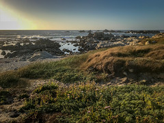 2018-06-29 19.30.02.jpg (david-meyer-photo-library) Tags: pacificgrove california unitedstates us