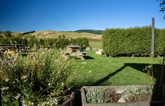 Good Picnic Area on a Summers Day (Jocey K) Tags: greystonevineyard newzealand nikond750 northcanterbury waiparavalley southisland building clouds sky vineyard bench plants trees fence scene landscape