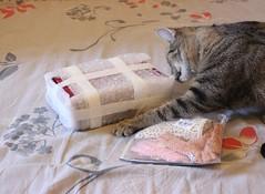 IMG_6461 (as.vice) Tags: dim dollinmind snowbelle cat