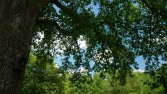 (Knipser85) Tags: panasonic lumix gx80 gx85 landschaft landscape nature natur