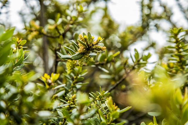 Flora del Nodo Guacheneque