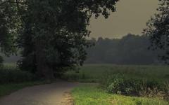 Light Show (Netsrak) Tags: baum bäume dunst europa europe landschaft meindorf natur nebel sieg fog haze landscape mist