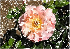 Wer sein irdisch' Leben will (amras_de) Tags: rose rosen ruža rosa ruže rozo roos arrosa ruusut rós rózsa rože rozes rozen roser róza trandafir vrtnica rossläktet gül blüte blume flor cvijet kvet blomst flower floro õis lore kukka fleur bláth virág blóm fiore flos žiedas zieds bloem blome kwiat floare ciuri flouer cvet blomma çiçek zeichnung dibuix kresba tegning drawing desegnajo dibujo piirustus dessin crtež rajz teikning disegno adumbratio zimejums tekening tegnekunst rysunek desenho desen risba teckning çizim