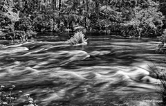 Hillsborough River Rapids (pandt) Tags: hillsboroughriver state park whitewater longexposure blackandwhite nature trees river water outdoor landscape canon t1i rebel slr florida flickr tampa