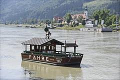 "Fähre Donaunixe ""ISA"" (Runemaker) Tags: fähre ferry donau danube nixe nixie river fluss cycling bicycling radfahren radweg donauradweg austria österreich"