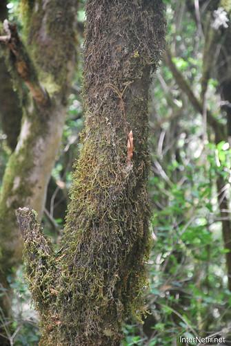Національний парк Гарахонай, Гомера, Канарські острови  InterNetri  0696