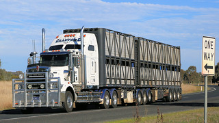 Livestock ~ Hume Fwy/Olympic Way (3/3)