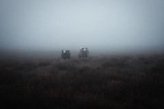 (Bazzerio) Tags: trek hike wild camping grainy adventure analogue animal sheep lakedistrict misty mist dream fujifilm x100f vintage film 35mm lost