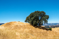 Landscape Composition - Tree on Hill - Mt. Diablo approach (BlueVoter - thanks for 2.2M views) Tags: tree arbol grass drought landscape mountdiablo mtdiablo bayarea eastbay