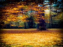 20151107-_1040965-G615-Tobias-Jeschke-www-fotoist-de-Bearbeitet (tobias jeschke fotoist.de) Tags: blätter bäume halle herbst jungfernwiese landschaftsbilder langzeitbelichtung verwaschen