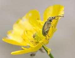 (nicolas_lottin) Tags: herbouilly isèredépartement lieux type vercors animaux fleur insecte macro plante