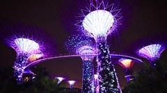 Super Tree Grove Singapore (Neil Holden) Tags: super tree grove singapore