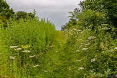 Nettle hill Circular Walk 17th June 2018 (boddle (Steve Hart)) Tags: rugbydistrict england unitedkingdom gb nettle hill circular walk 17th june 2018 steve hart boddle steven bruce wyke road wyken coventry united kingdon great britain canon 5d mk4 6d 100400mm is usm ii 2470mm standard wild wilds wildlife life nature natural bird birds flowers flower fungii fungus insect insects spiders butterfly moth butterflies moths creepy crawley winter spring summer autumn seasons sunset weather sun sky cloud clouds panoramic landscape