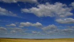 Paysandú, Uruguay (Eduardo Amorim) Tags: campo field champ cielo céu sky nubes nuvens clouds nuages árvore arbol tree arbre albero baum árvores arboles trees arbres alberi bäume puntasdelgualeguay paysandú uruguay uruguai pampa campanha fronteira sudamérica südamerika suramérica américadosul southamerica amériquedusud americameridionale américadelsur americadelsud eduardoamorim