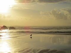 Cannon Beach near Sunset (altfelix11) Tags: oregon cannonbeach pacificocean beach ocean clouds sky sunset clatsopcounty gull birds