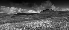 2016.08.29. Iceland (Péter Cseke) Tags: holiday iceland landscape nature travel easternregion is