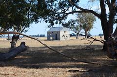 DSC_8754 abandoned shed, 1.1 km south Hay Shed Lane, Konetta Road, Conmurra, South Australia (johnjennings995) Tags: conmurra abandoned shed southaustralia australia farm