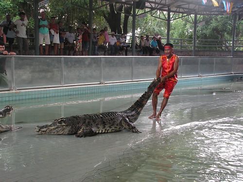 В пащу крокодилу Паттайя Таїланд Thailand InterNetri 36