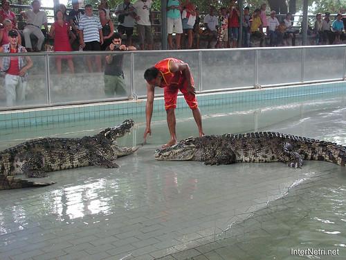 В пащу крокодилу Паттайя Таїланд Thailand InterNetri 35