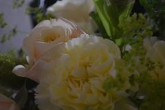 DSC_0087 (sxcxxhx) Tags: japan osaka kyoto hydrangea flower trip voyage 日本 大阪 京都 旅行