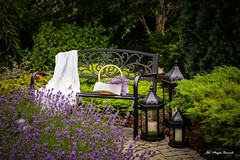 A lavender corner in my garden (Magda Banach) Tags: bench canon lavender colors flora flower flowers garden green lanterns nature outdoor outside plants poland summer violet blanket peaceful basket