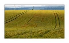 Spurensuche in der Provence (Babaou) Tags: frankreich france provencealpescôtedazur provence moustiers plateaudevalensole feld getreidefeld mohn coquelicot dxopl lalonde2018