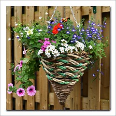 170 - 365 Hanging Basket (linda.addis) Tags: 3652018anewfocus 2018th17 basket