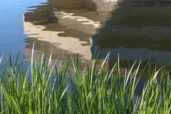 York University reflections - 2 (nican45) Tags: 14may2018 14052018 1770 1770mm 1770mmf284dcmacro 2018 canon dslr eos70d heslington may sigma universityofyork yil york yorkincidentlight yorkuniversity yorkshire campus evening lake photography reflection walk water
