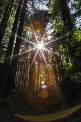 Nantosuelta (jde95tln) Tags: jackson demonstration state forest canon 6d california northerncalifornia colors trees tree spirit angel sun burst