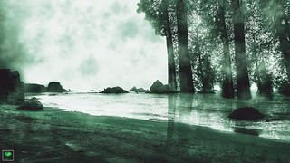 SURREAL TREE SEA - EMERALD COAST © Cody Jacobson-ZEN MOUNTAIN MEDIA all rights reserved