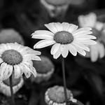 Feeling Black and White thumbnail