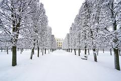 Alley between snowy trees, Arkhangelskoye, Russia (Andrey Sulitskiy) Tags: russia arkhangelskoye россия архангельское