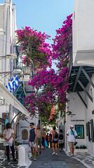 DSC02674.jpg (valerie.toalson) Tags: flowers mykonos greece mykonostown